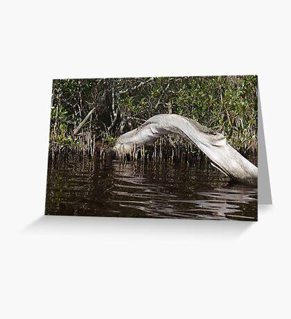 Mangrove Log Greeting Card