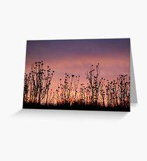 Thistles,Barrabool Hills Greeting Card