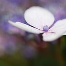 whisper softly... by Natalia Campbell