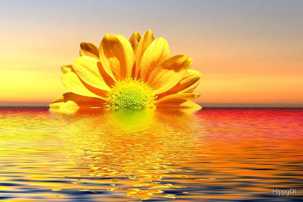 Chrysanthemum  Sunset by HippyDi