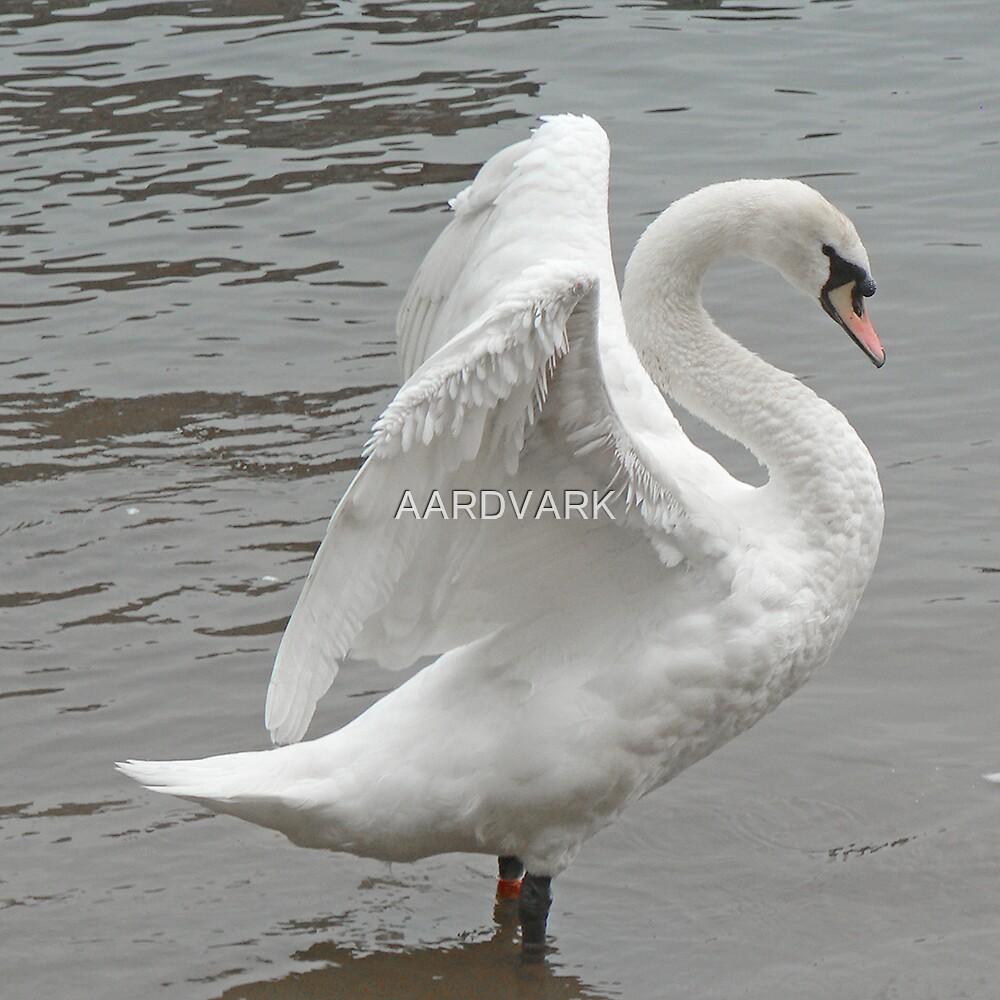 A Rampant Mute Swan by AARDVARK