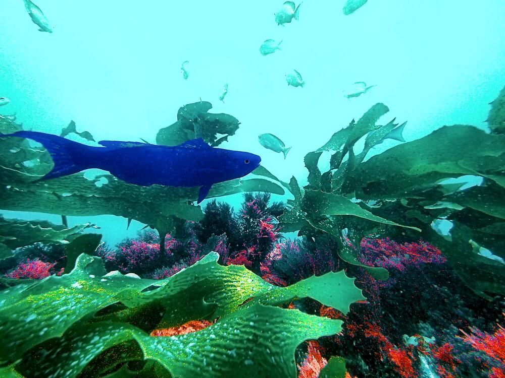 A Blue Beauty by Fishbait