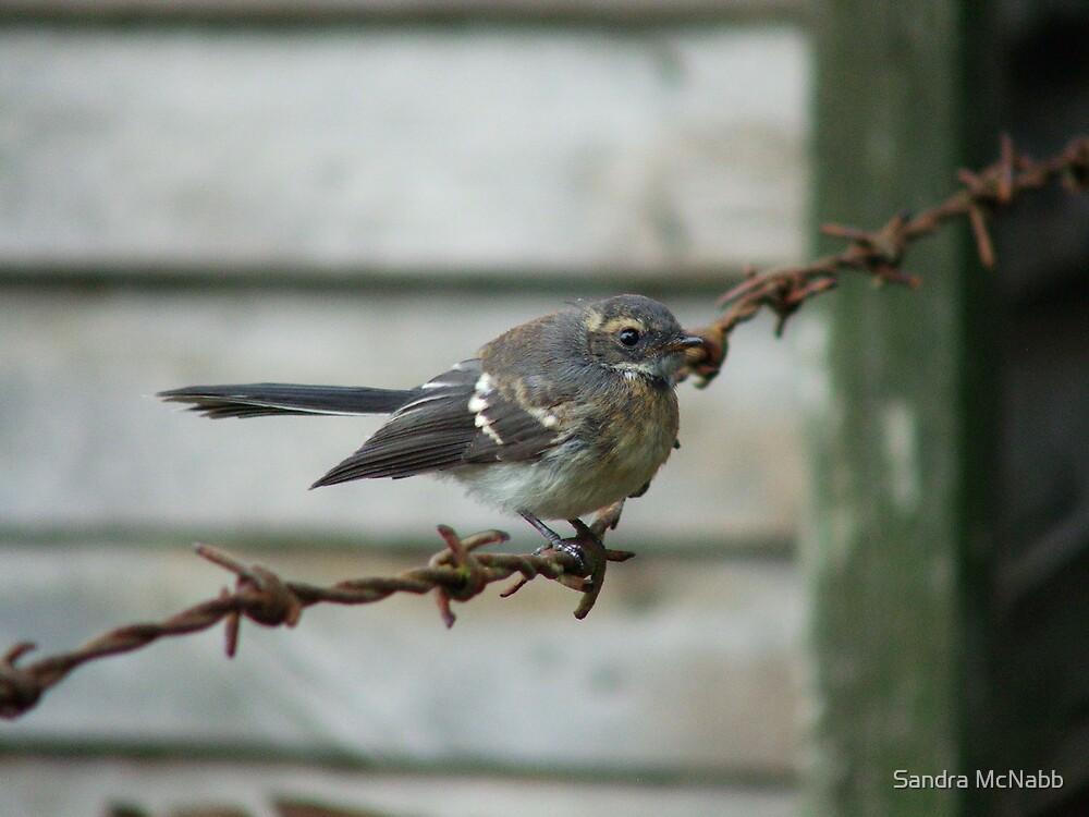 bird on a wire by Sandra McNabb