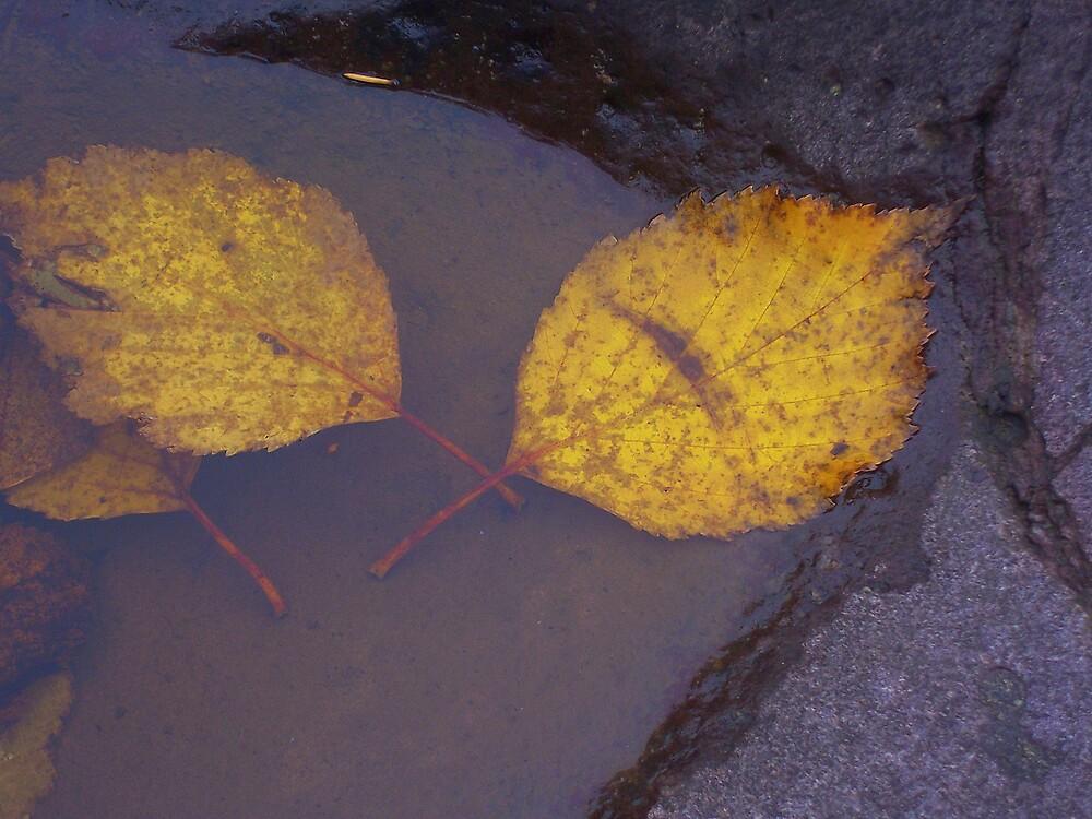 Aspen Leaves by babyangel