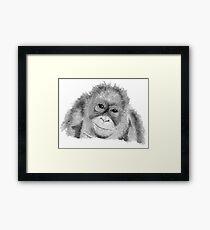 Orangutan - black and white Framed Print