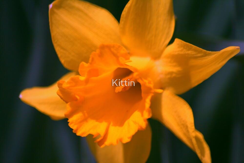 flower 12 by Kittin