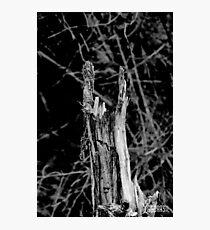 Heavy metal tree trunk Photographic Print