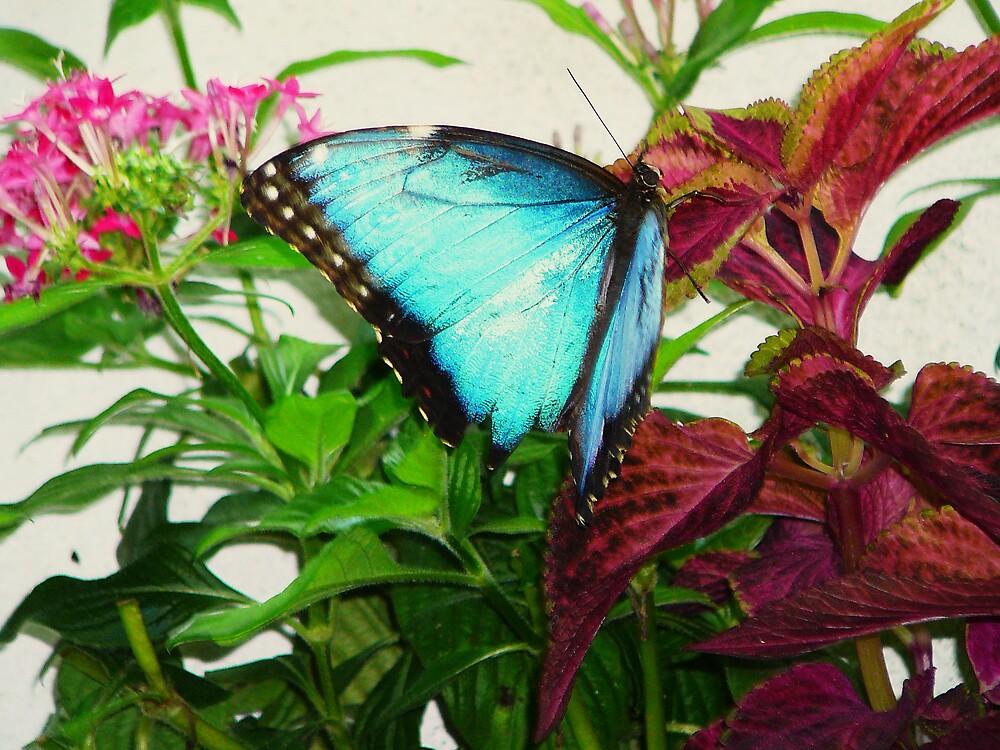 butterfly 2 by ReverieAuriel