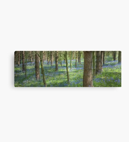 Bluebell Profusion Canvas Print