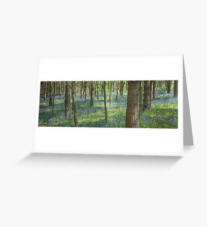 Bluebell Profusion Greeting Card