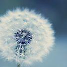 dandelion blues by Ingrid Beddoes