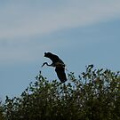 more heron by dougie1