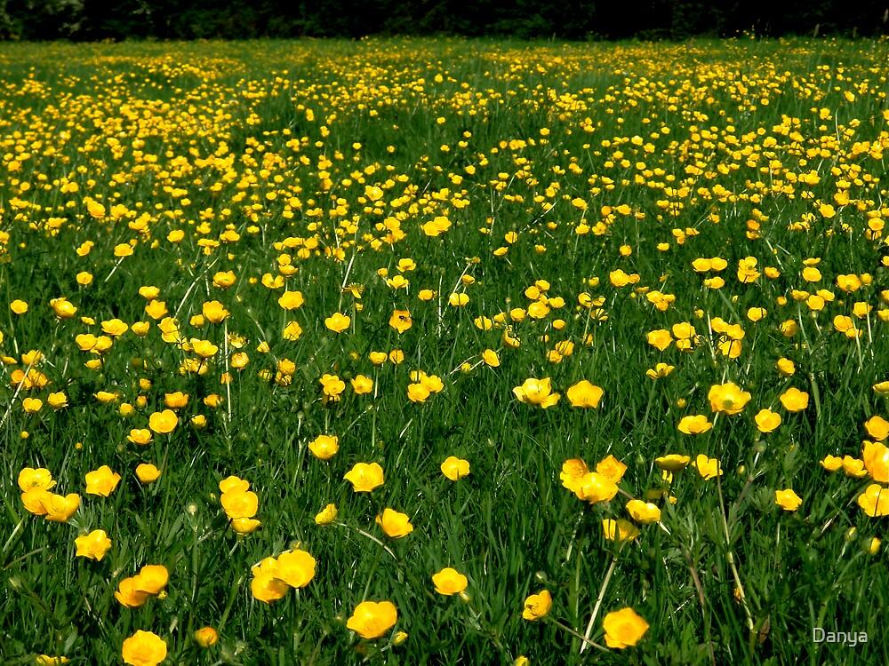 Buttercups in Malmesbury by Danya