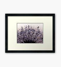 droplets of mauve Framed Print