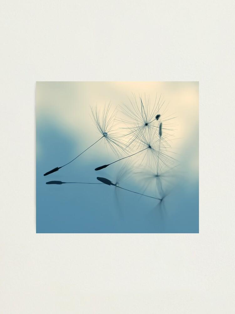 Alternate view of cloud nine Photographic Print