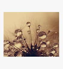Toffee Drops Photographic Print