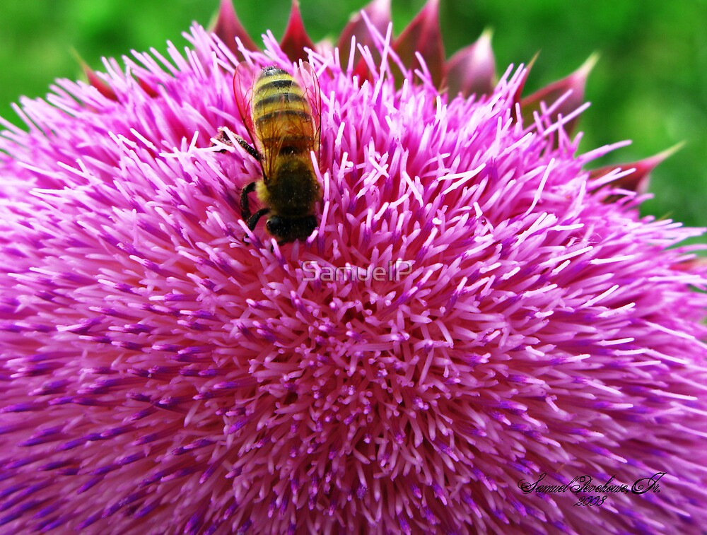 Thistle While You Work by Samuel Pevehouse