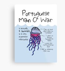 Portuguese Man O' War Is Actually 4 Animals In A Very Progressive Relationship Metal Print