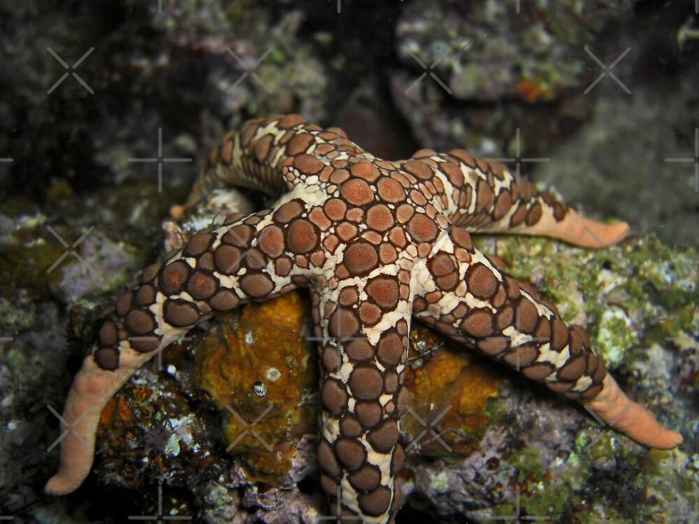 Flacid Starfish by Michael Powell