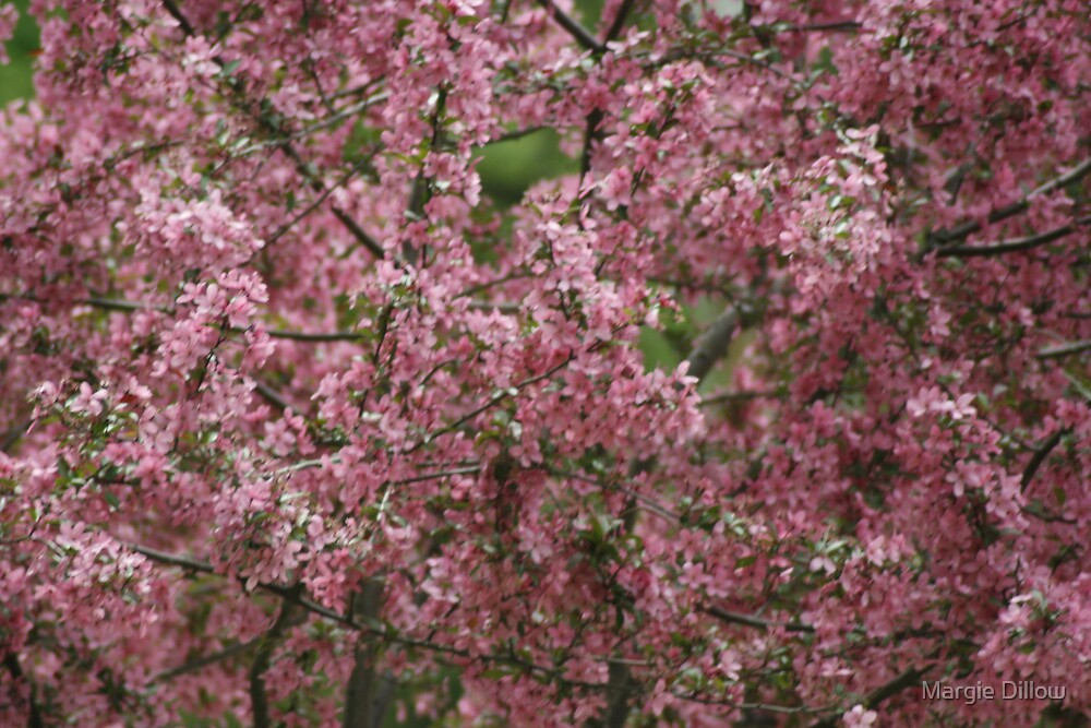 Blossoms by Margie Dillow
