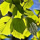 GREEN LEAVES by MIKESCOTT