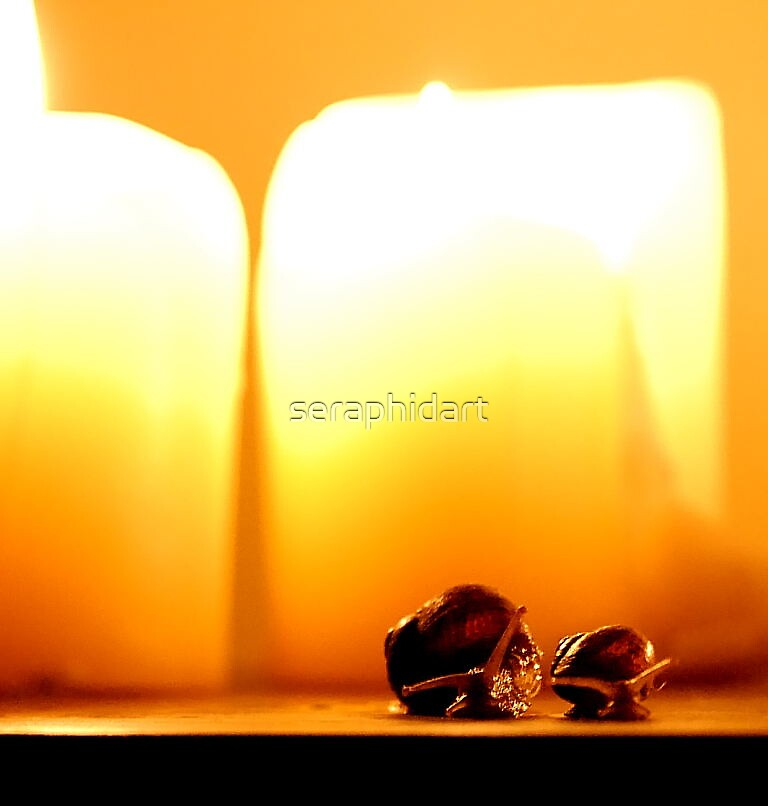 Snails and candle light by seraphidart