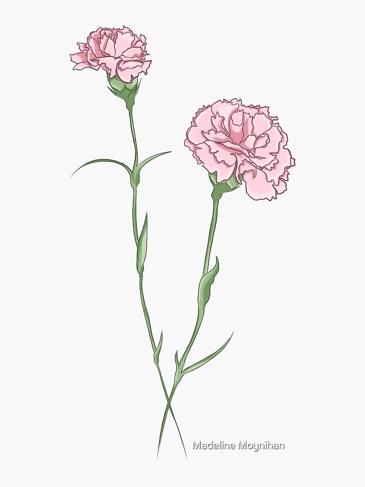 carnation by madmoynihan