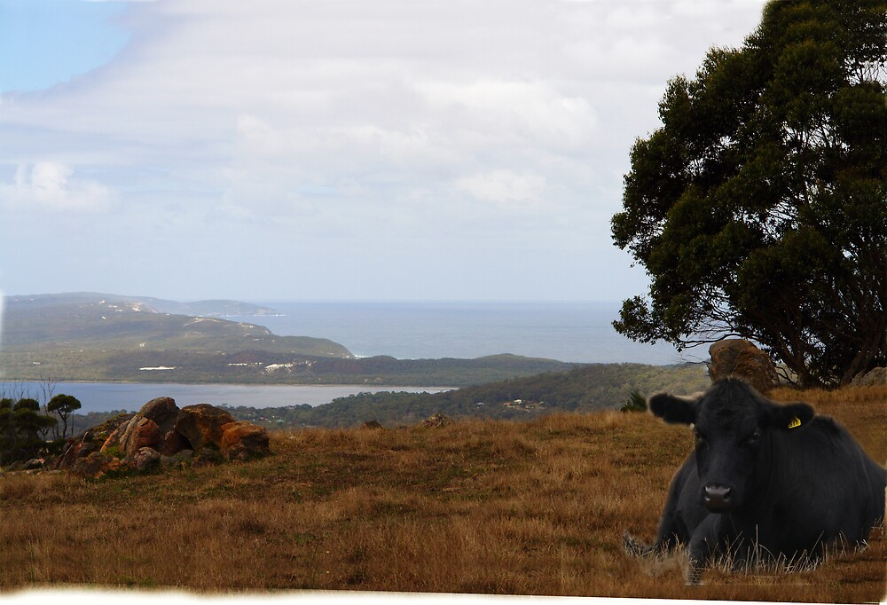 View from Mt Shadforth by georgieboy98