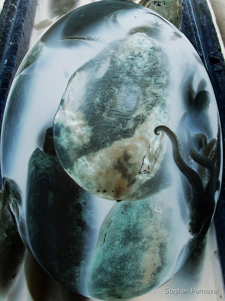 Squid - Digital Art by Stephen Permezel