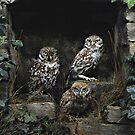 owls  by marxbrothers