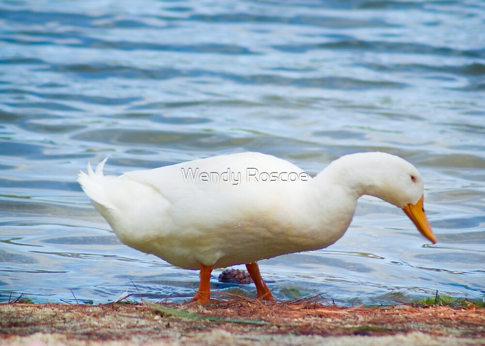 Ducking by Wendy Roscoe