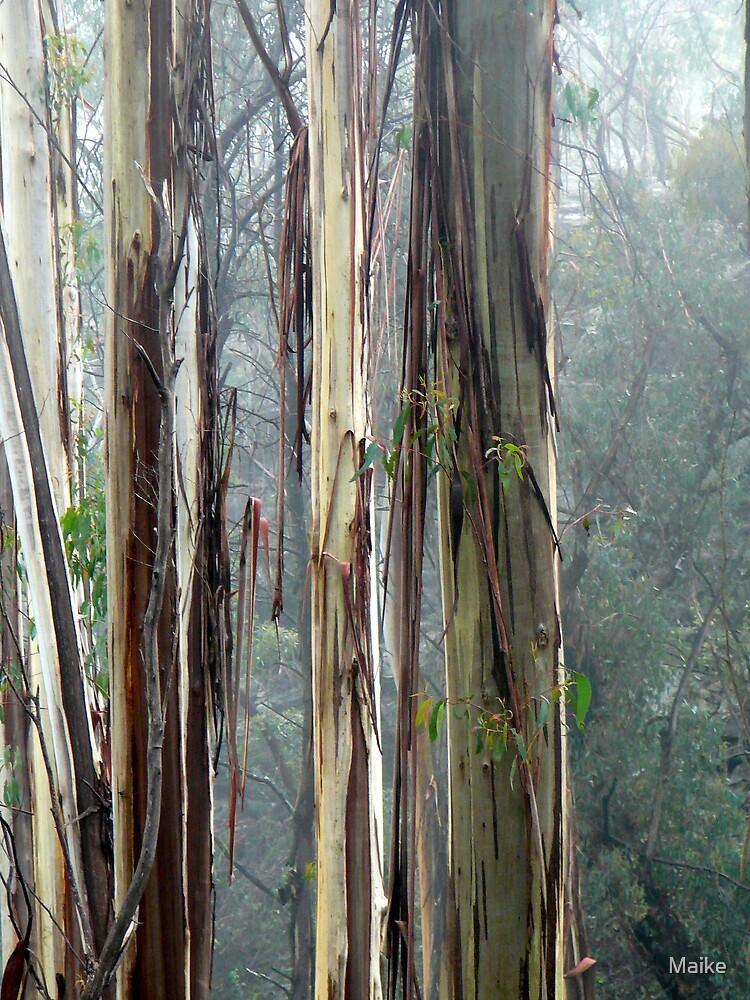 Australian Bush- Stringy Bark by Maike