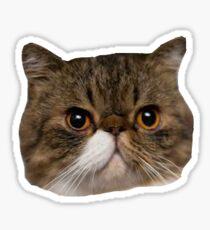 FERGUSON NEW GIRL Sticker