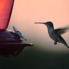 Sunset Hummingbird by scenicvibephoto