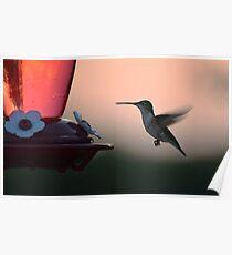 Sonnenuntergang-Kolibri Poster