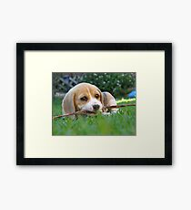 Cheeky Puppy Framed Print