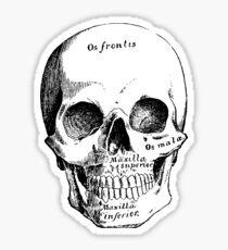 Science, Skull Diagram Drawing Sticker