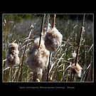 Bulrushes by Magee