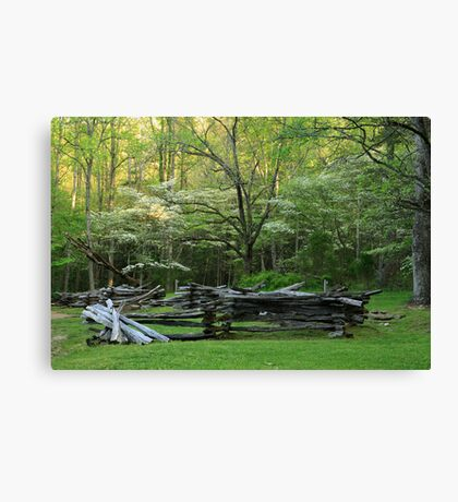 Early Spring Morn Canvas Print