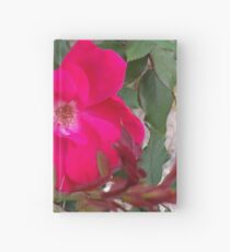 A little nature to brighten up the room Hardcover Journal