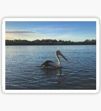 Pelican, Maroochy River, Queensland Sticker