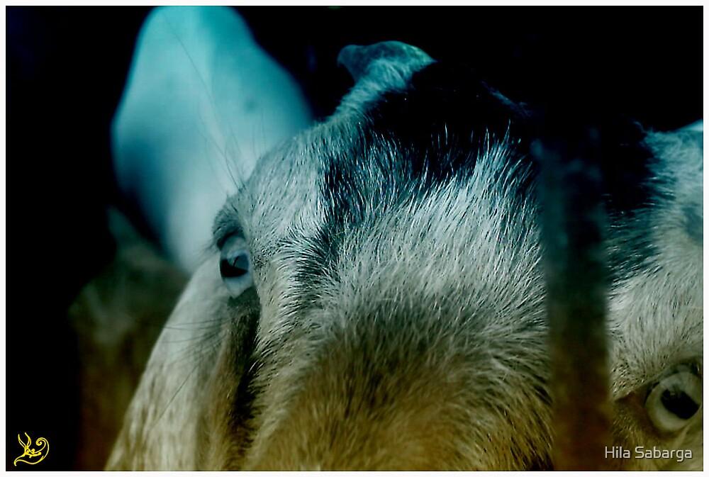 A Goat. by Hila Sabarga
