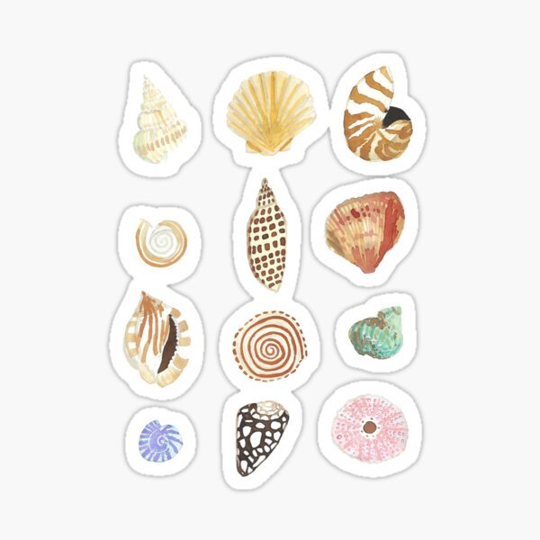 Shell Collection Sticker
