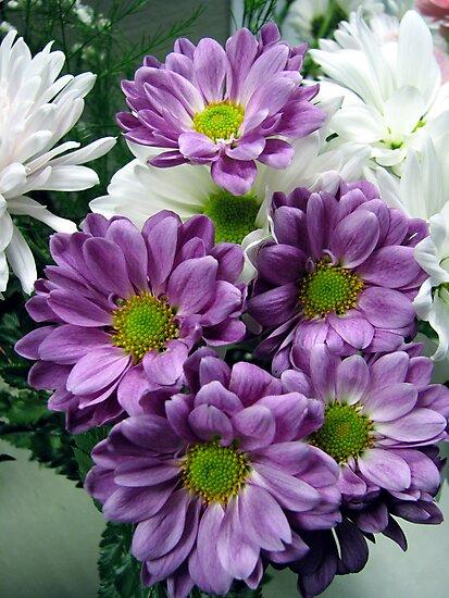 Lavender Cuties  by LavenderMoon