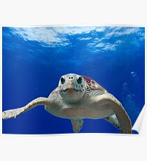 Beautiful Ocean Turtle, HD Photograph Poster