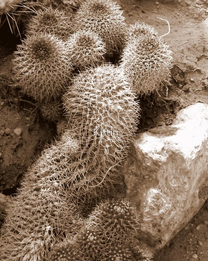 cactus 11 by Kittin