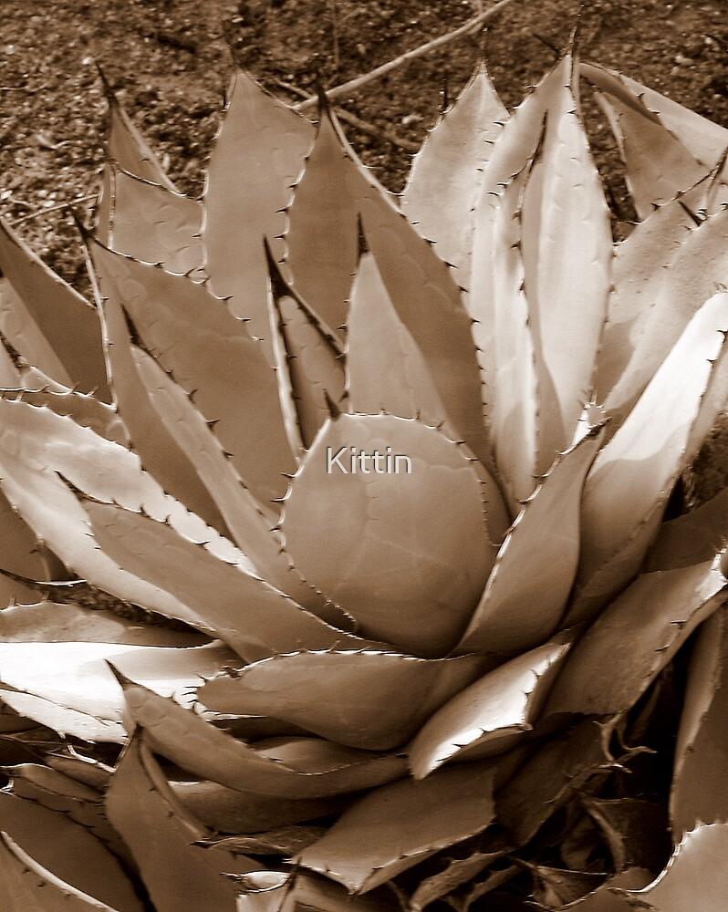 cactus 12 by Kittin