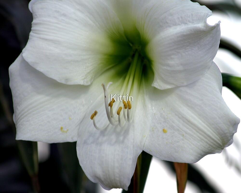 lily 08 by Kittin