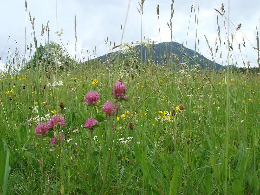 Meadow in Austria by Edelweiss