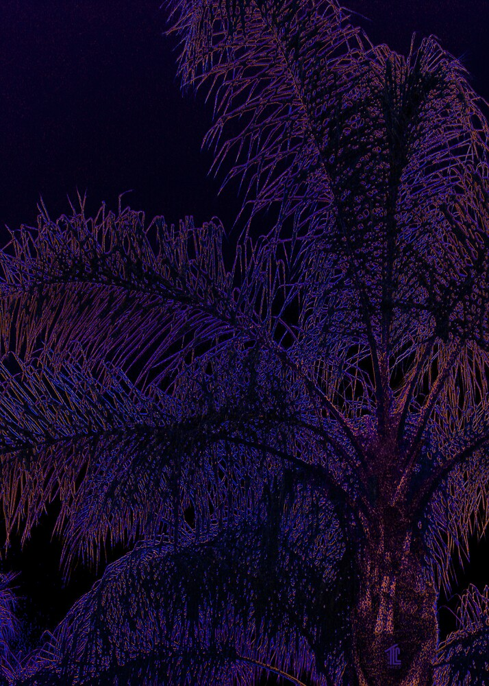 The Palm Glows at Midnight by TLCGraphics